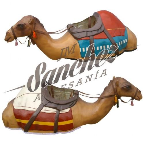 Camellos  adultos
